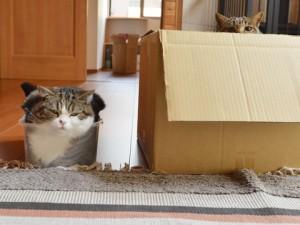 Les 4 étapes clés d'un déménagement réussi